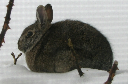 Rabbit Photo